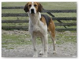Adam~