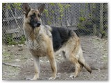 Boodie~
