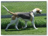 Charm~