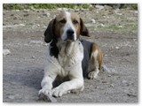 Sindy~